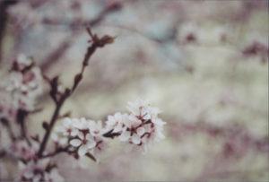 jaro10_Fotor