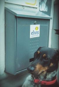 4. ELVIS 2